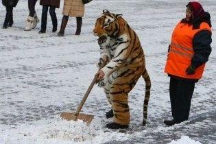 Студентів змусять розчищати сніг у Києві