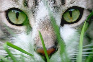 На Харківщині кіт з'їв труп свого господаря