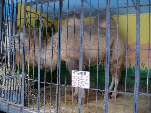 У покинутому зоопарку в Сєвєродонецьку гинуть екзотичні тварини