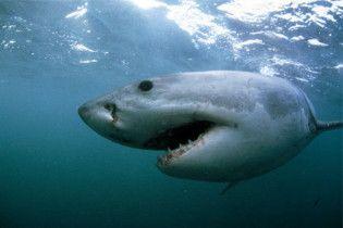 Австралійська пенсіонерка відбилася від акули кулаками