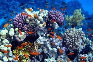 Вчені відкрили п'ять тисяч нових видів морських тварин