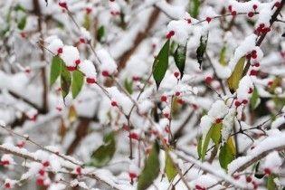Погода на п'ятницю, 11 лютого