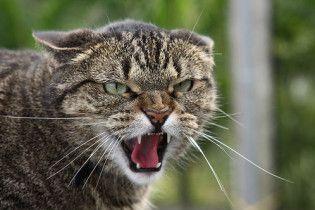З гуртожитку виселили кота зі складним характером