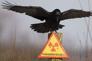 Уряд засіє землі в Чорнобильскій зоні
