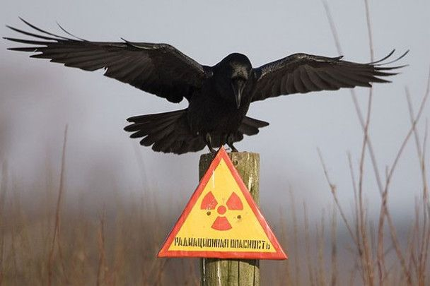 Чорнобиль закрили для туристів
