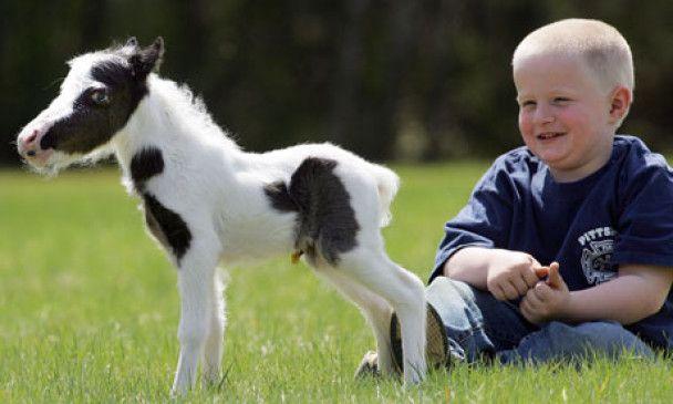 У США народилася найменша у світі конячка зростом 35 сантиметрів
