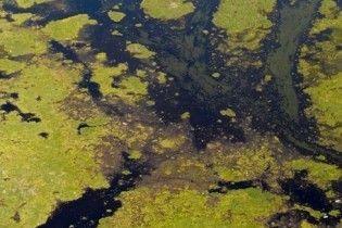 Допомогу США в ліквідації витоку нафти запропонували 13 країн і ООН