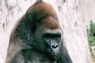 Відкрито новий штам вірусу ВІЛ, який передається людині від горил