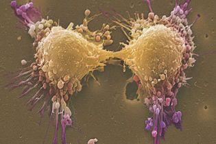 Вчені відкрили секрет захисту клітин від раку