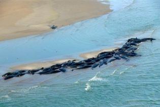 """Поблизу Австралії 50 китів """"вчинили самогубство"""""""