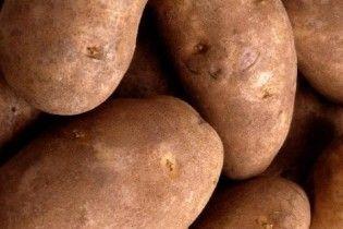 В Україні стрімко зростають ціни на картоплю