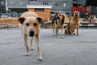 Оператор Першого каналу захлинувся в калюжі через напад собак