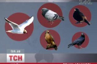 Як птахи атакують літаки (відео)