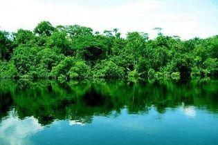 Бразилия активно уничтожает амазонские леса (видео)