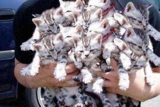 В Китаї 300 котів врятували від продажу в ресторани