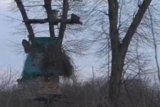 Чоловік збудував на дереві хатинку... на чотири поверхи