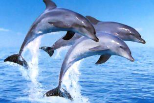 В Україні заборонено ловити дельфінів