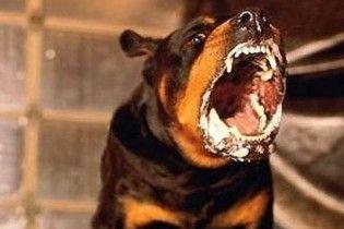 За напади собак на людей, їх власників саджатимуть на 12 років