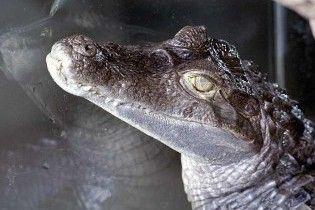 Львівські прикордонники затримали крокодилів, мавп і папуг