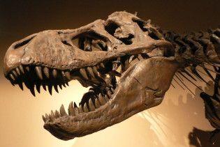 Тиранозаври масово вимирали від ангіни