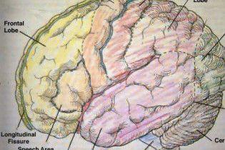 Протягом 10 років науковці створять штучний людський мозок