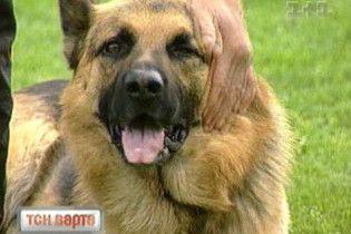 ТСН-Варта: як вберегти своїх дітей від сусідських собак