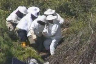 На рятувальників, які прибули на місце ДТП, напали бджоли