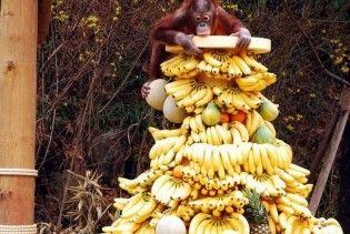 В Папуа-Новій Гвінеї діє секта, що обіцяє гори бананів за привселюдний секс