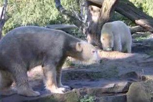 Найвідоміший ведмідь Кнут більше не одинак