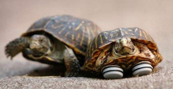 Черепаха з протезами