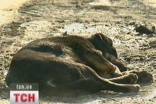 У Києві труять собак