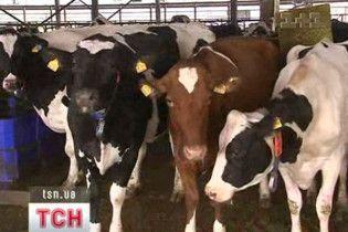 В Україні запрацювала перша біостанція з видобутку електроенергії з коров'ячого гною