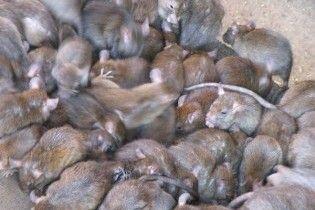 Черновецький ліквідує підприємство, яке воює зі столичними пацюками