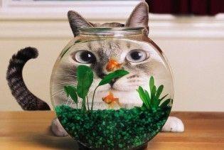 """""""Мобільні"""" золоті рибки та коти попереджають самогубства"""