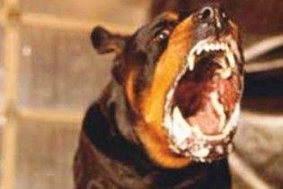 В Україні зростає кількість тварин, заражених сказом