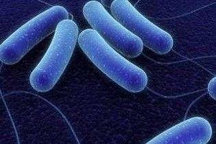 Японці навчилися дресирувати  бактерії