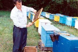 У Ющенка наполягають, що бджільництво – шляхетна праця