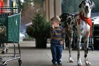 У США помер найвищий у світі собака