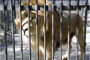 П'яному прикарпатцю відкусив руку лев