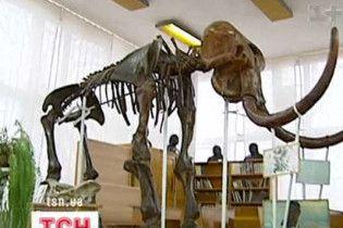 Вчені довели, що льодовиковий період не є причиною вимирання мамонтів