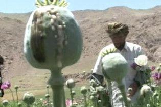 США більше не буде знищувати посіви опійного маку в Афганістані