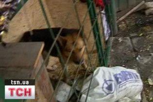 Німецьку вівчарку, яка загризла восьмирічну дівчинку, присплять