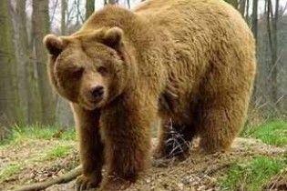 Жінка побила двоцентнерного ведмедя кулаками