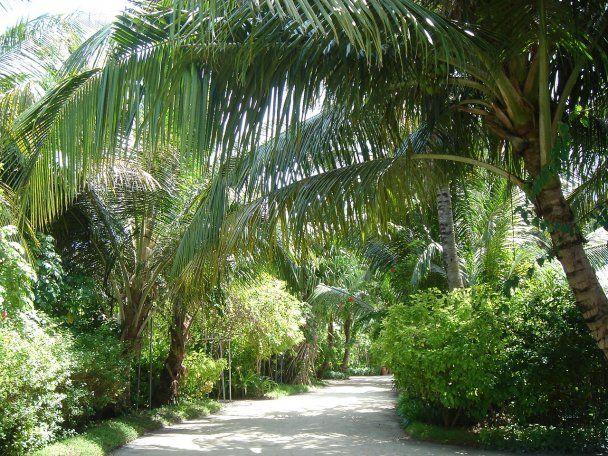 Мальдіви - рай на Землі