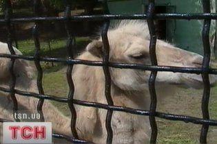 Заїжджі циркачі кинули у Запоріжжі замордованого верблюда