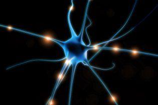 Нейрони центру руху в мозку радяться один з одним
