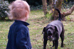У Кривому Розі собака пошматував трирічну дитину