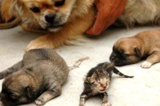 У собаки народилося кошеня
