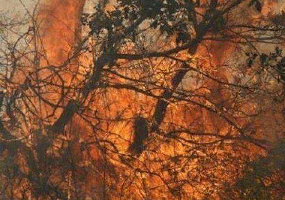 Лісова пожежа в Сербії