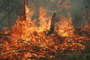 У лісах Криму оголошено підвищену пожежну небезпеку